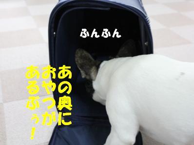 2_20110222143206.jpg