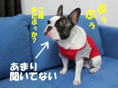 2_20110302101750.jpg