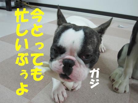 3-1_20101020143756.jpg