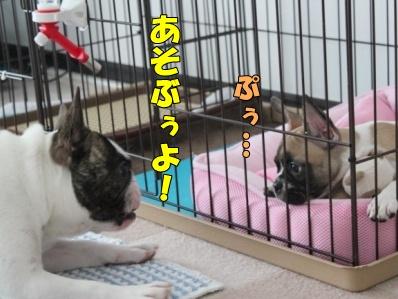 3-1_20110617161401.jpg