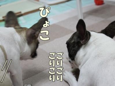 3-1_20111017163947.jpg