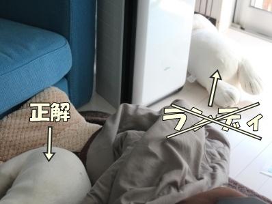 3-1_20120116102159.jpg
