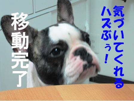3_20100624145611.jpg