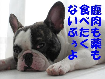 3_20101104141148.jpg