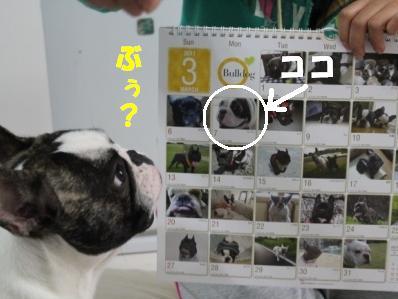 3_20101213135116.jpg