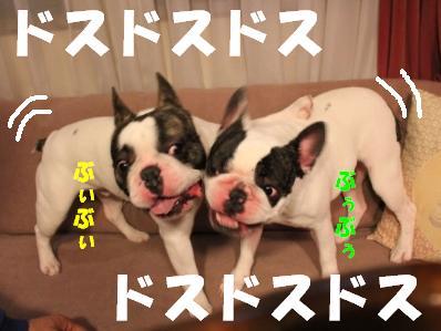 3_20110113152836.jpg