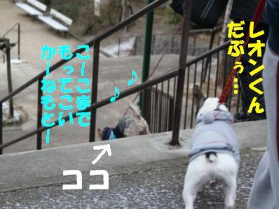 3_20110118121247.jpg