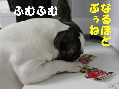 3_20110221094143.jpg