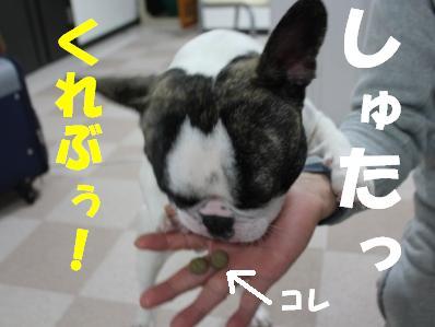 3_20110222164659.jpg