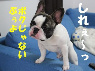 3_20110304145018.jpg