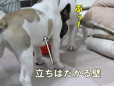 3_20110808144910.jpg