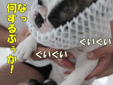 3_20111021132416.jpg