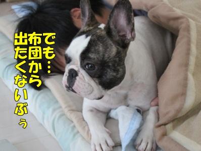 3_20111117112831.jpg