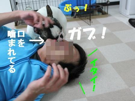 4-1-1_20101117115240.jpg