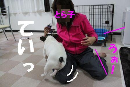 4-1-1_20101119111224.jpg