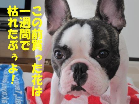 4-1_20100823134636.jpg