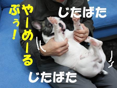 4-1_20101122135906.jpg