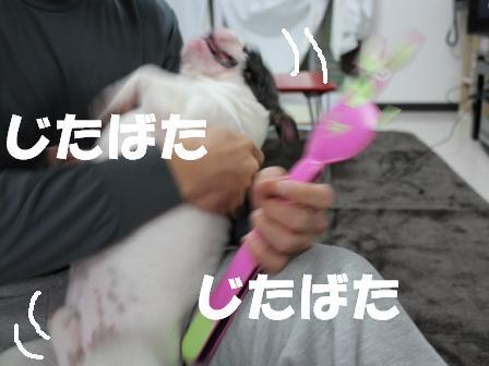 4-1_20101124170557.jpg