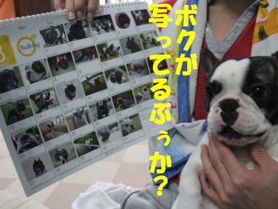 4-1_20101213135116.jpg