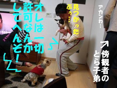 4-1_20110112153010.jpg