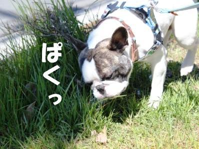 4-1_20110328151445.jpg