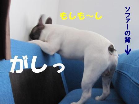 4_20100722130757.jpg
