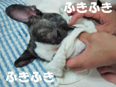 4_20100728161243.jpg