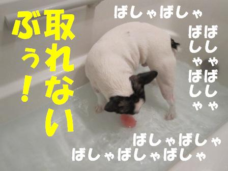 4_20100903103355.jpg