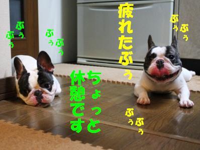 4_20110113152835.jpg