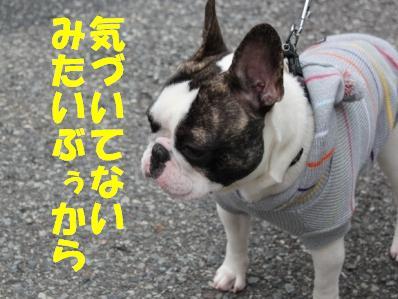 4_20110118121247.jpg