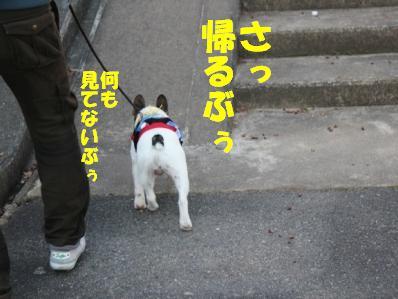 4_20110120133240.jpg