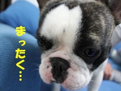4_20110124160151.jpg