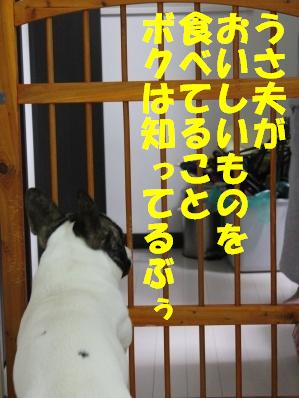 4_20110203161459.jpg