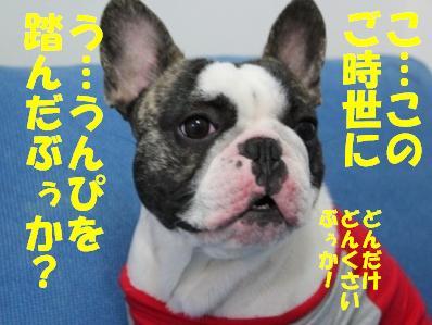 4_20110302101749.jpg