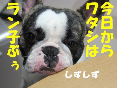 4_20110303151151.jpg