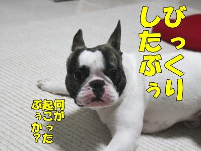 4_20110624115543.jpg