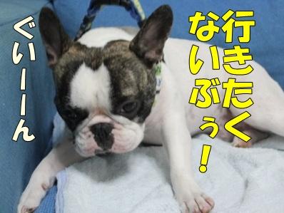4_20111118094400.jpg