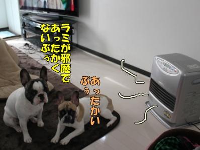 4_20111205130614.jpg