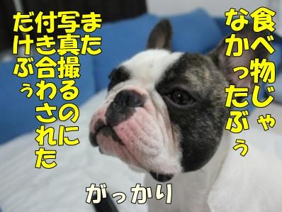 5-1_20110805135457.jpg