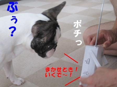 5_20100706101601.jpg