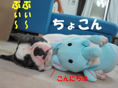 5_20100726125046.jpg