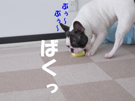 5_20100805143613.jpg