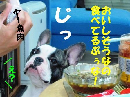 5_20100818151319.jpg