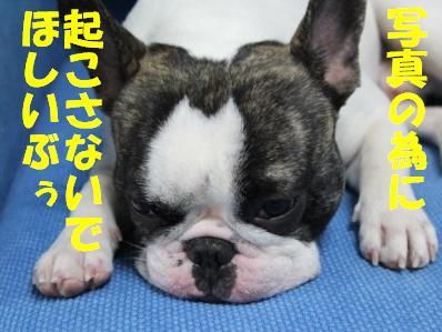 5_20110124160150.jpg