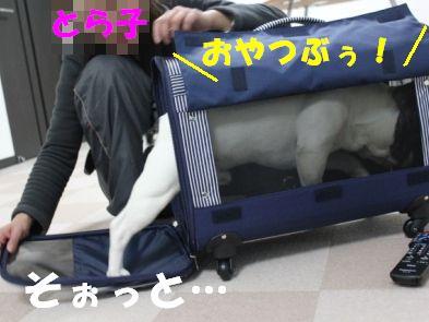 5_20110222143206.jpg