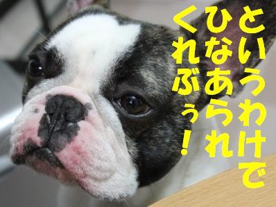 5_20110303151151.jpg