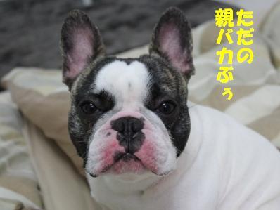 5_20110407110138.jpg