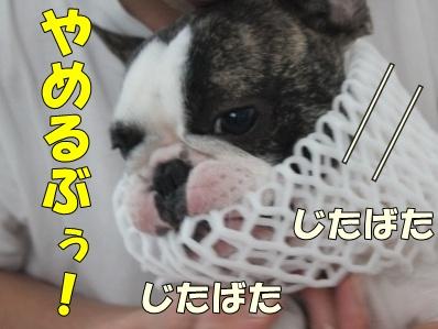 5_20111021132416.jpg