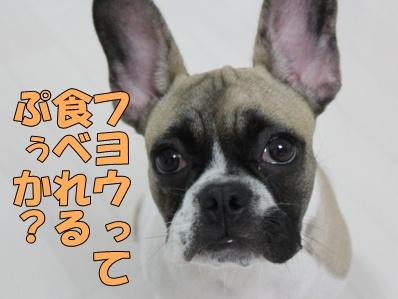 5_20111108132534.jpg