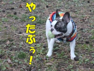 5_20111110091932.jpg